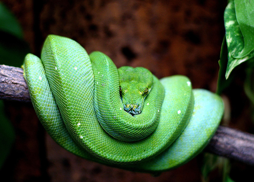 snakes essay